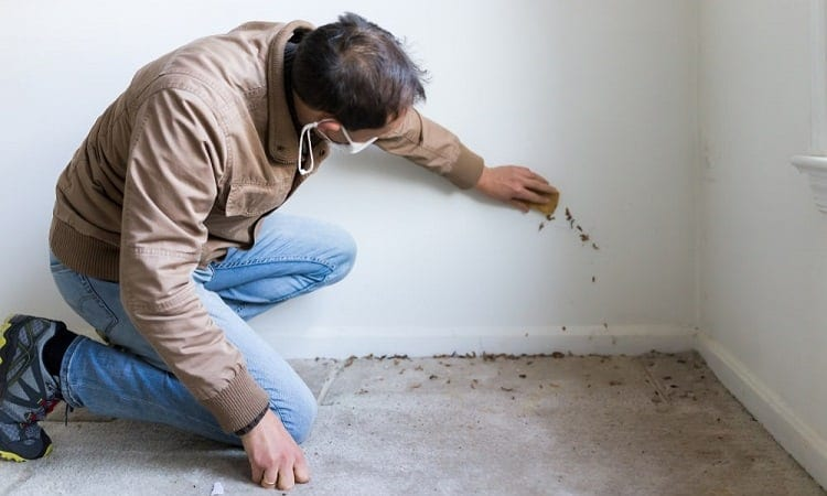 Inspecting A Potential Property With Mold